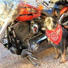 Jeda getting her 'Harley Dog' on!!
