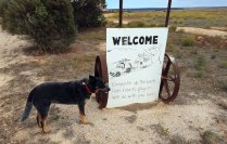 Coorabie-Farm-Welcome-sign