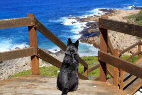 Great Ocean Drive-waiting
