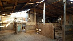 Koonalda-Homestead-inside-old-shearing-shed