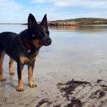 A calm morning at Sandy Beach, Laura Bay SA