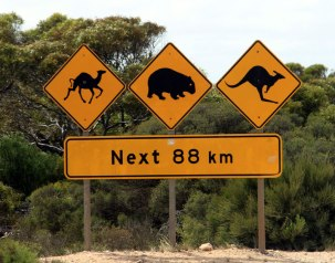 Sign-Camels-Wombats-Roos