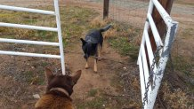 Jeda trying desperately to get through the gate