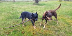 My stick not yours!