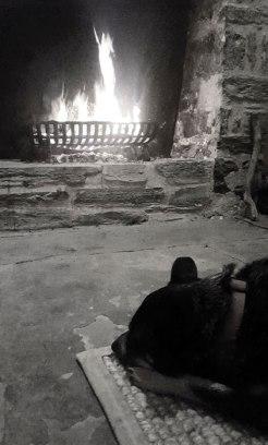 Jeda found a warm spot