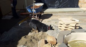 Site Dog on duty in gravel
