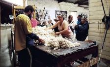 Classing the fleece