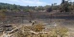 Burnt out farmland