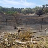 Burnt out farmland