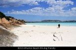 BS123-Wharton-Beach-WA-dog-