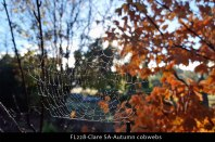 FL228-Clare-SA-Autumn-cobwebs