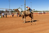 Demo on how NOT to dismount a camel - he landed in a heap on the ground!
