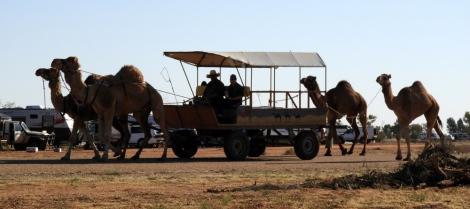Rides @ Boulia Camel Races