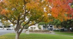 Angaston-autumn colours