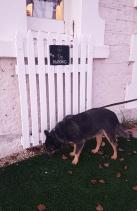 Kingston SE-Bliss Cafe has Dog Parking area
