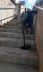Mannum Stairwell from hell!
