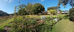 Douglas Vale Vineyard-vege garden & homestead