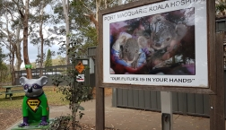 Koala Hospital, Port Macquarie