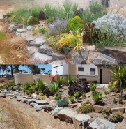 Live or Die Rock Garden, before & after weeding