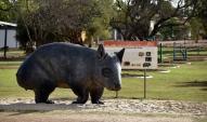 Thallon - Endangered Wombat statue