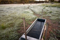 Frozen trough in paddock