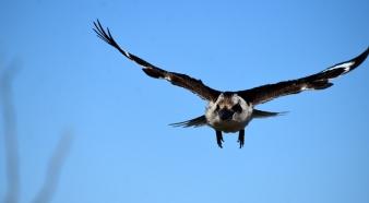 Lara Wetlands-Kookaburra coming at ya!